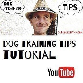 corsi di educazione del cane tutorial dog training tips
