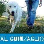 cane al guinzaglio e smarrimento del cane