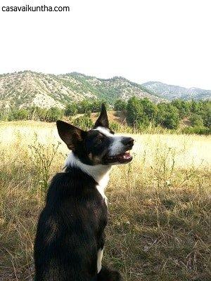 frame dal video sensibilità di ascolto del cane