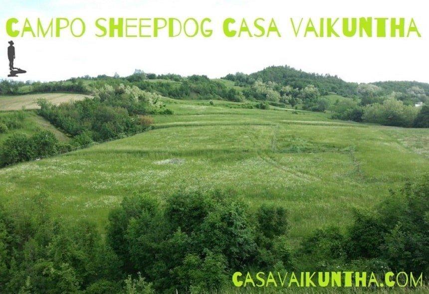 campo sheepdog casa vaikuntha