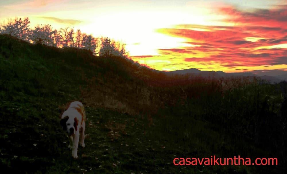 studiare il comportamento del cane al tramonto