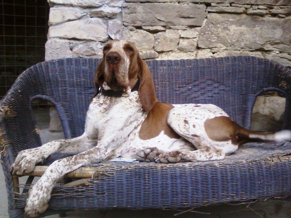 pensione per cani casa vaikuntha