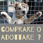 cultura cinofila comprare o adottare un cane