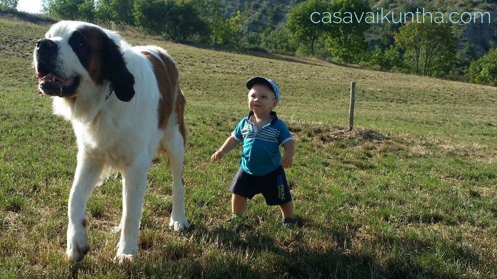 comportamento del cane oltre la definizione di alessandro