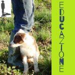 educazione-del-cane-e-addestramento-cani