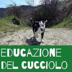 educazione del cucciolo e il posto del cane