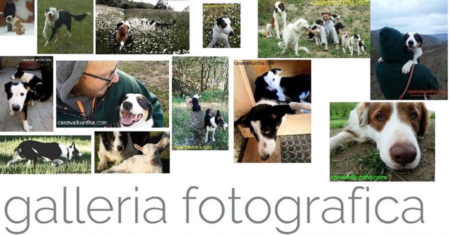 foto di cani nella galleria fotografica di casa vaikuntha