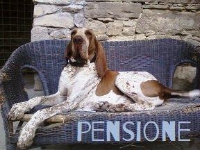 pensione per cani casavaikuntha