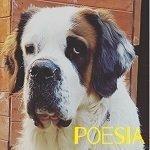 poesia san bernardo razze di cane