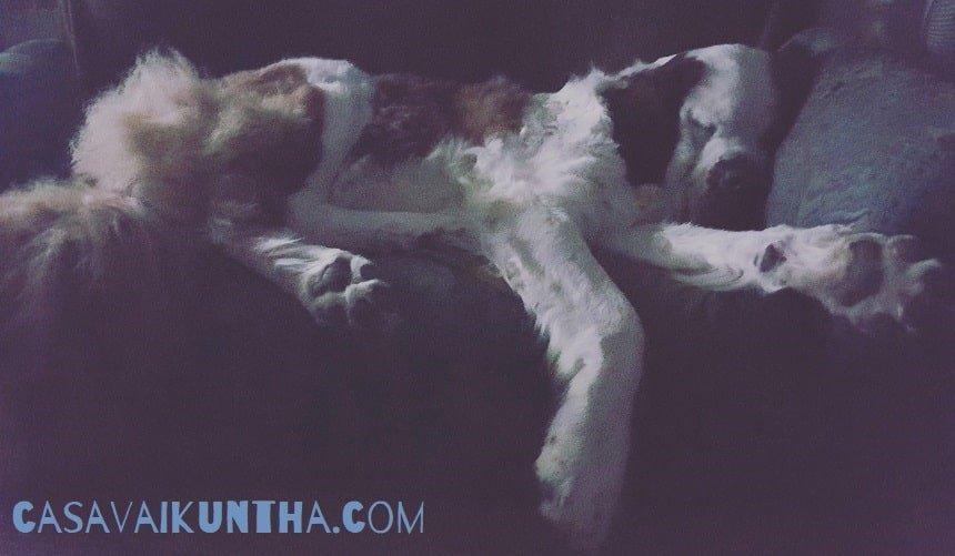 posto del cane a casavaikuntha