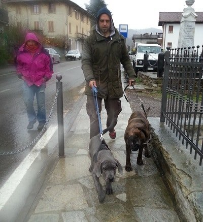 cane e padrone corso grigio