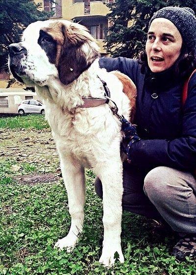 cane e padrone san bernardo