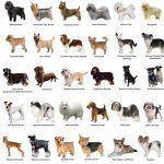 elenco razze di cane