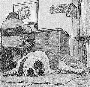 razze di cane san bernardo