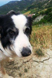 il mio secondo cane anziano