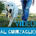 video cane al guinzaglio