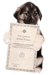 cane con pedigree