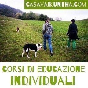 corsi di educazione del cane individuali