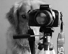 etologia del cane