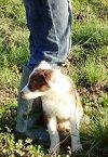etologia del cane educazione del cane