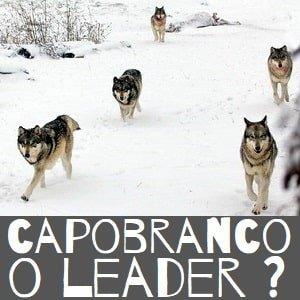 Capobranco o leader?