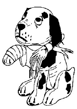 manovre di primo soccorso per cani