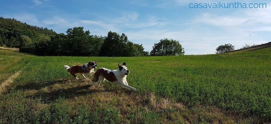 durante una passeggiata possono essere necessarie manovre di primo soccorso per cani