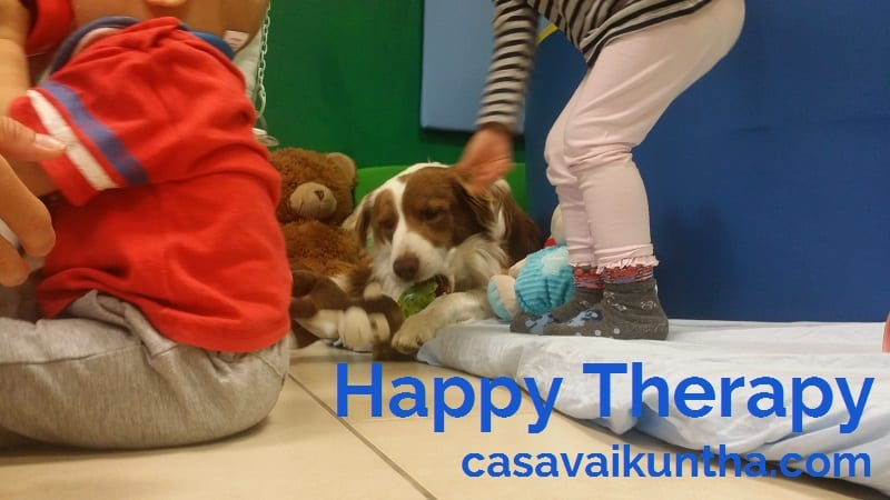 Happy Therapy pet education