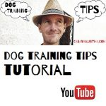 attività cinofile di casa vaikuntha e dog training tips