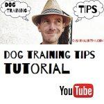 video attivita cinofile e dog training tips