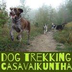 video attività cinofile dog trekking a casa vaikuntha