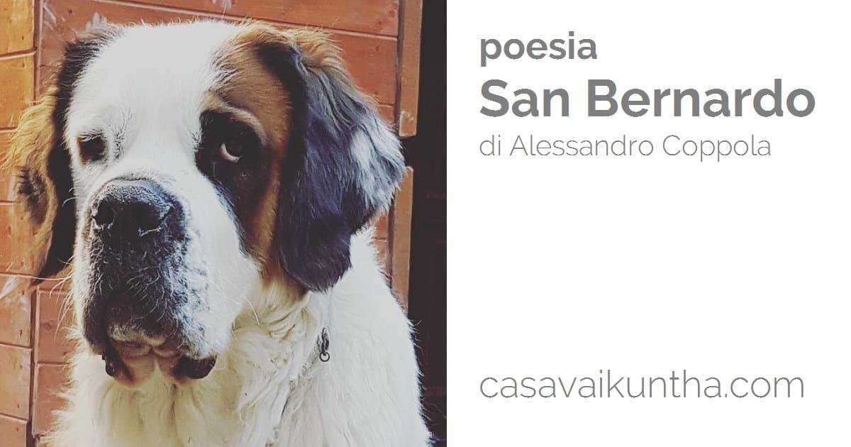 Poesia San Bernardo Dedicata Ai Cani Razza San Bernardo