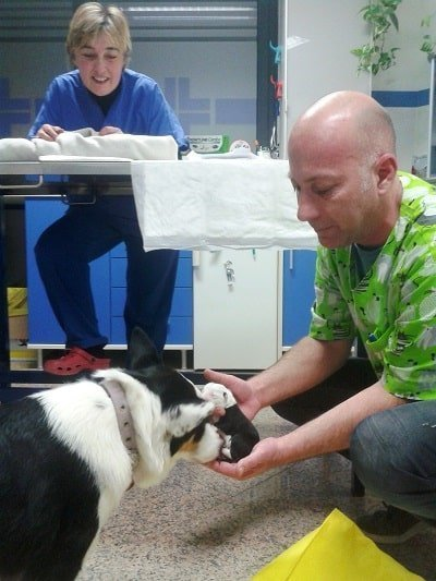 parto cesareo presso veterinario varzi