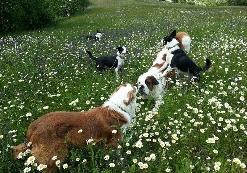 alimentazione vegetale per cani