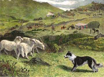 gare nella storia dello sheepdog in italia