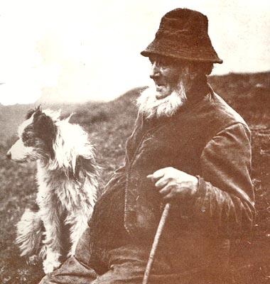 storia dello sheepdog in italia e nella pastorizia