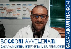pronto soccorso bocconi avvelenati il veterinario risponde