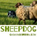 casavaikuntha offre una dimostrazione sheepdog alla festa di fabbrica curone
