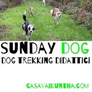 secondo stage io e il mio cane amici per sempre o sunday dog