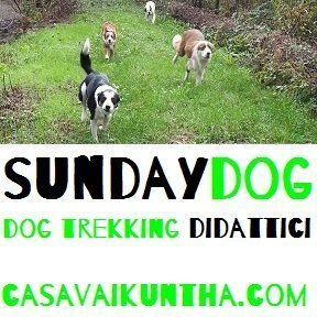 SUNDAY DOG - Dog trekking didattici