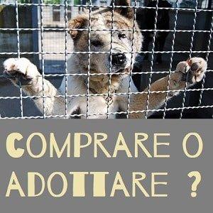Comprare o adottare un cane?
