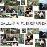 video attivita cinofile e galleria fotografica