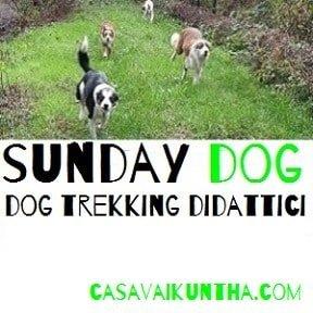 dog trekking didattici