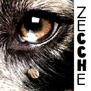 I parassiti del cane: le zecche