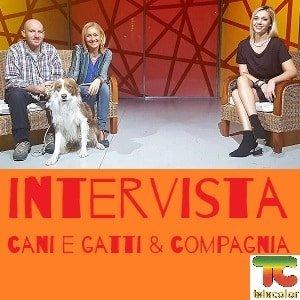 intervista televisiva a cani e gatti e compagnia