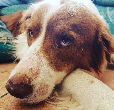 pet therapy case di riposo progetto il cane terapeutico – casavaikuntha