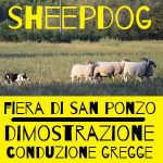 dimostrazione sheepdog alla festa di fabbrica curone e alla fiera di san ponzo