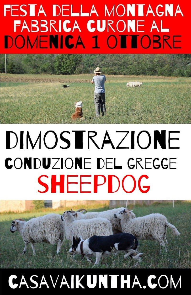 locandina dimostrazione sheepdog alla festa di fabbrica curone