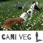 intervista televisiva a cani e gatti e compagnia alimentazione vegetale per cani