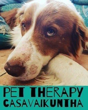 casavaikuntha pet therapy